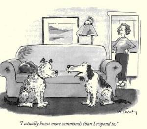 dog commonads