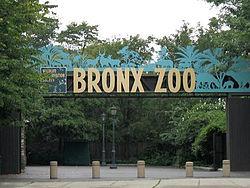 ronx_Zoo_00